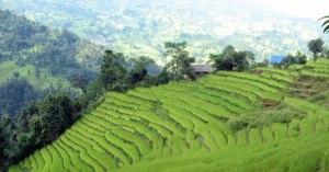 Basa Nepal